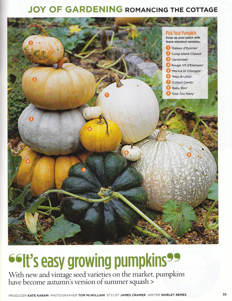 how to grow super pumpkins
